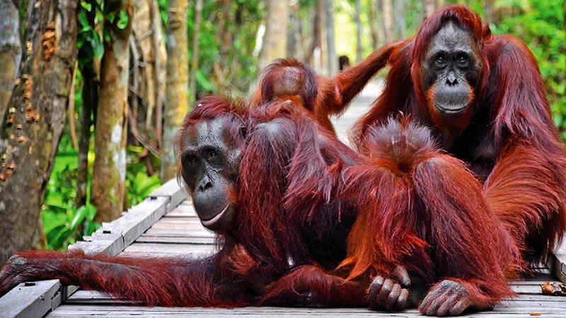 Wisata Indonesia yang Menjadi Tujuan Wisata Asing